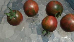 Violet Jasper tomatoes