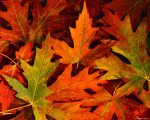 fall-leaves-autumn-graphy-views_356851