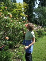 rosesmell